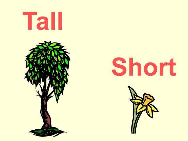 Лист с надписью tall и short